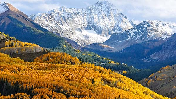 Beautiful-places-in-California-Autumn-in-Colorado-birch-forest-with-yellow-leaves-pine-green-forest-rocky-mountains-covered-with-snow-sky-915x515