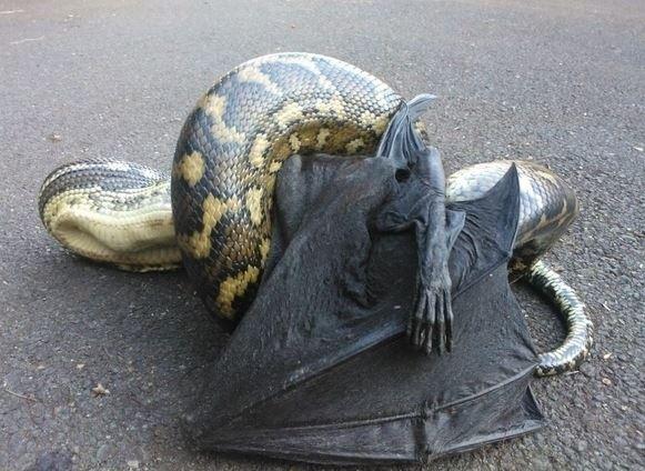 Pythons2